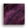 Spiny Oyster (purple)